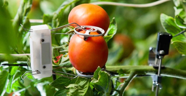 IoT в агропромышленности